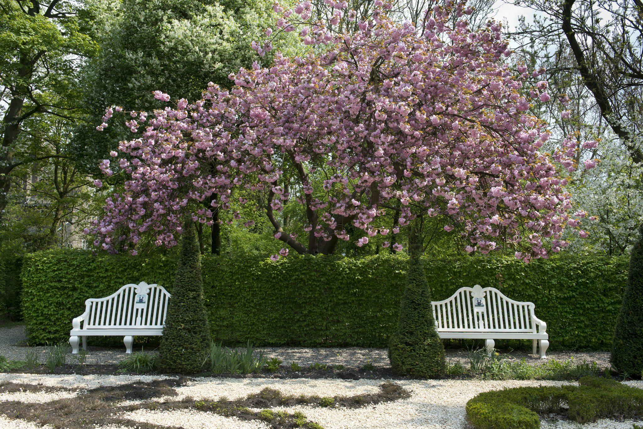 Magnoliaboom in de tuin